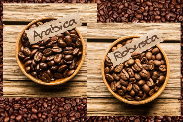 cafea arabica vs cafea robusta