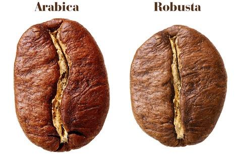 bob arabica vs bob robusta