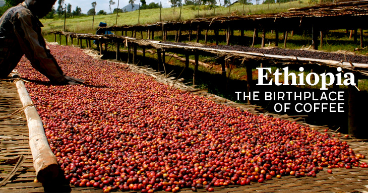 etiopia tara de origine a cafelei